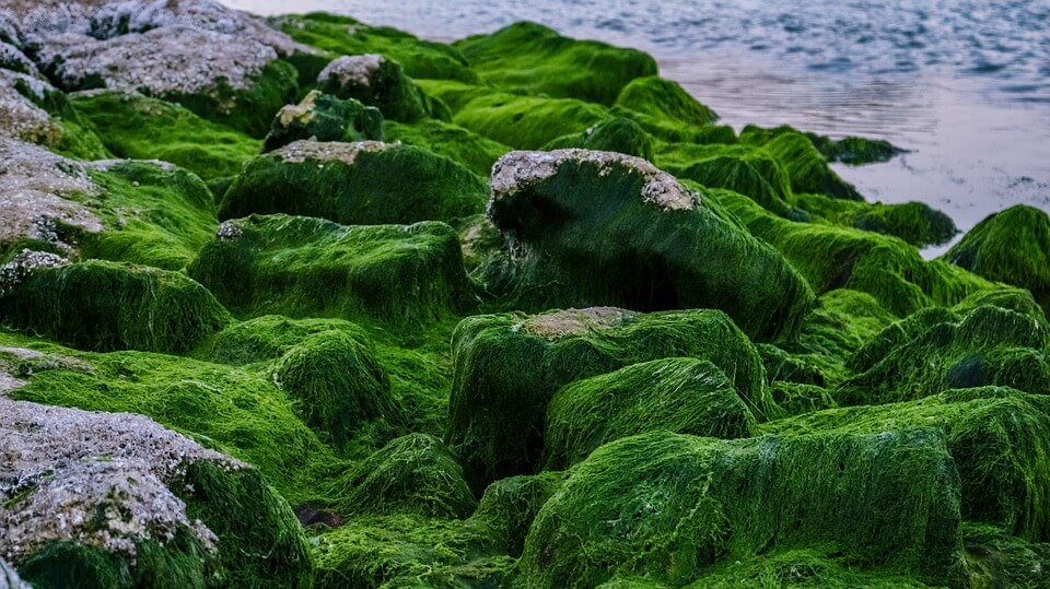 As algae blooms increase, scientists seek better ways to predict these toxic tides